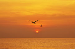 Beautiful sunset above the sea Royalty Free Stock Images