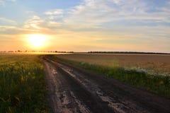 Beautiful sunset. Royalty Free Stock Image