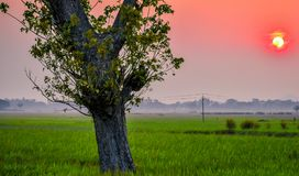 A beautiful sunset along with tress and grass field. stock image