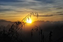 Beautiful sunset background. With plants royalty free stock photo