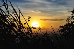 Beautiful sunset background. With plants royalty free stock images
