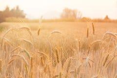 Beautiful sunset at bales field Stock Image