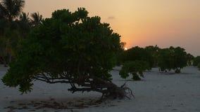 Beautiful sunset on the beach. Maldives. 4k stock footage