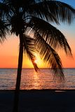 Beautiful sunset on the beach, sun goes down to the sea. Palm on the bayshore. Calm ambient, rest and relaxation concept. Stunning. View to the horizon royalty free stock photos