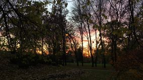 Beautiful sunset behind branches and trees in the park stock video footage