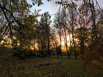 Beautiful sunset behind branches and trees in the Park Royalty Free Stock Images