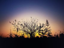 Beautiful sunset behind interesting tree|| nature love || sky colors||shadow photography|| best shot royalty free stock images