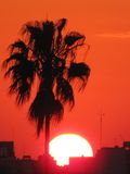 Beautiful sunset behind a palm tree and the buildings of the City of Buenos Aires. Stock Photos