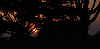 Beautiful sunset behind the silhouette. Of a tree Royalty Free Stock Photography