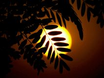 BEAUTIFUL SUNSET BEHIND A TREE stock photography