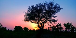 Beautiful sunset behind the tree in the forest stock photo royalty free stock photo