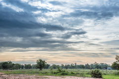 Beautiful sunset with blue sky over the rice field in Thailand. royalty free stock photo