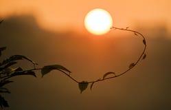 Beautiful sunset and cirrus Stock Image