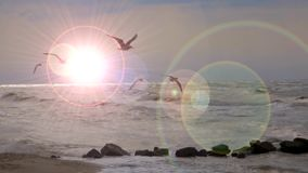A beautiful sunset on the coast. A beautiful landscape at sunset, with seagulls flying over the sea waves. In the background the reflections of the rays of the stock video