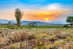 Beautiful sunset at countryside agriculture dry field and hut Stock Images