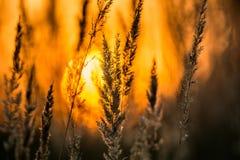 Beautiful sunset at countryside meadow Stock Photos