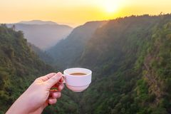 Beautiful sunset With a cup of coffee at The deep forest in Southern of Laos royalty free stock photography
