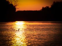 Beautiful sunset in the Danube Delta, Romania. Beautiful sunset in the Danube Delta, Tulcea, Romania royalty free stock photo