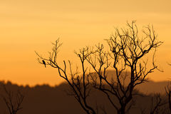 Beautiful sunset and dead tree Stock Image