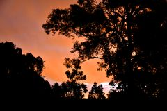 Beautiful Sunset through Eucalyptus Trees. A colourful sunset with a silhouette of eucalyptus trees Stock Images
