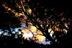 Beautiful Sunset through Eucalyptus Trees. A colourful sunset with a silhouette of eucalyptus trees Stock Photography