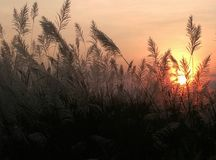 Beautiful sunset in the evening. royalty free stock photos