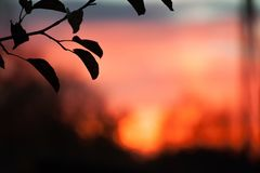 Beautiful sunset with exotic sky and silhouette bamboo branch and leaves in scene. Beautiful sunset with exotic sky and silhouette bamboo branch and leaves in royalty free stock image