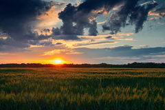 Beautiful sunset in field Royalty Free Stock Photos