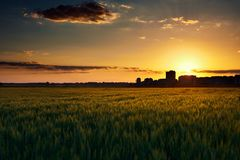 Beautiful sunset in the field with houses silhouette on the horizon, summer landscape, bright colorful sky and clouds as backgroun. D, green wheat Stock Photography