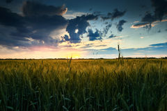 Beautiful sunset in field, summer landscape, bright colorful sky and clouds as background, green wheat Royalty Free Stock Images