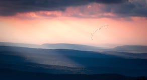 Beautiful sunset with a flock of birds Royalty Free Stock Photos