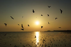 Beautiful sunset and flying birds over the sea Stock Image