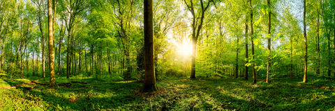 Beautiful forest royalty free stock image