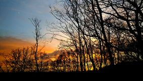 Beautiful sunset in forest Royalty Free Stock Photos