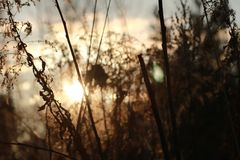 Sunset with grass and forest. Royalty Free Stock Photos