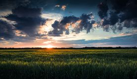 Beautiful sunset in green field, summer landscape, bright colorful sky and clouds as background, green wheat Royalty Free Stock Image