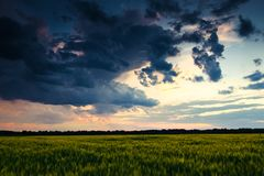 Beautiful sunset in green field, summer landscape, bright colorful sky and clouds as background, green wheat Stock Photo