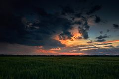 Beautiful sunset in green field, summer landscape, dark colorful sky and clouds as background, green wheat Royalty Free Stock Photography