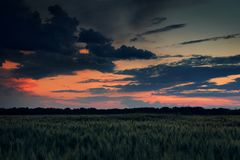 Beautiful sunset in green field, summer landscape, dark colorful sky and clouds as background, green wheat Stock Image