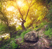 Beautiful sunset in the green forest. Summer landscape Stock Image