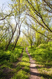 Beautiful Sunset In Magic Forest. Trail. Spring Landscape