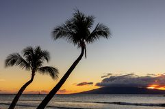 Beautiful Sunset on the Island of Maui. Palm trees silhouetted in a beautiful tropical sunset on the island of Maui Stock Images