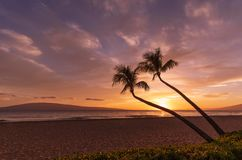 Palm Trees in a Kaanapali Beach Sunset Maui. A beautiful sunset on Kaanapali beach Maui stock images
