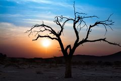 Beautiful sunset landscape, dry tree branches silhouette in the desert in Sossusvlei, Namibia royalty free stock photos