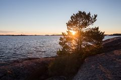 Beautiful sunset landscape. Pine tree growing on the rock. royalty free stock images