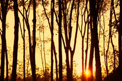 Beautiful sunset light ray sunshine with tree silhouette backgro Royalty Free Stock Images