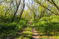 Beautiful sunset in magic forest. Trail. Spring landscape Stock Photo