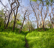 Beautiful sunset in magic forest. Trail. Spring landscape Royalty Free Stock Image