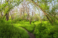 Beautiful sunset in magic forest. Trail. Spring landscape Stock Photos