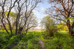 Beautiful sunset in magic forest. Trail. Spring landscape Stock Images